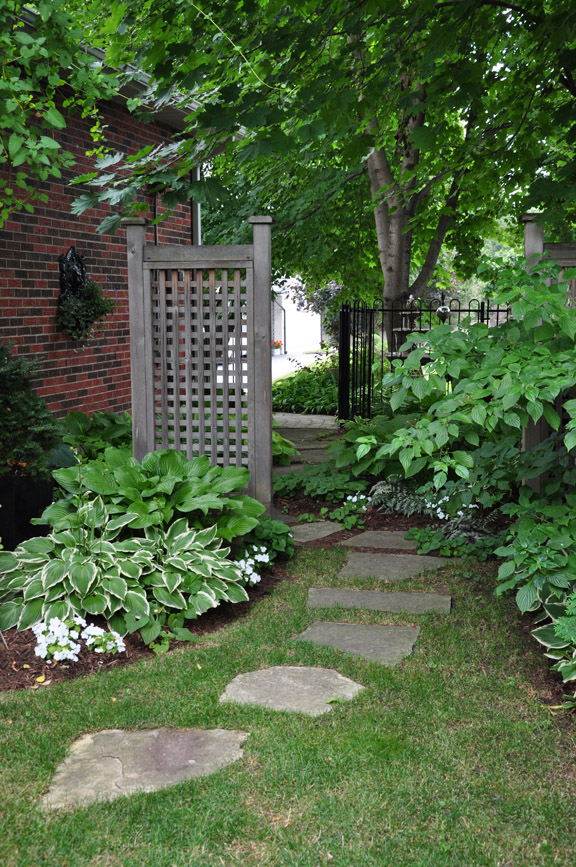 Landscaping Your Side Yard : Three dogs in a garden may