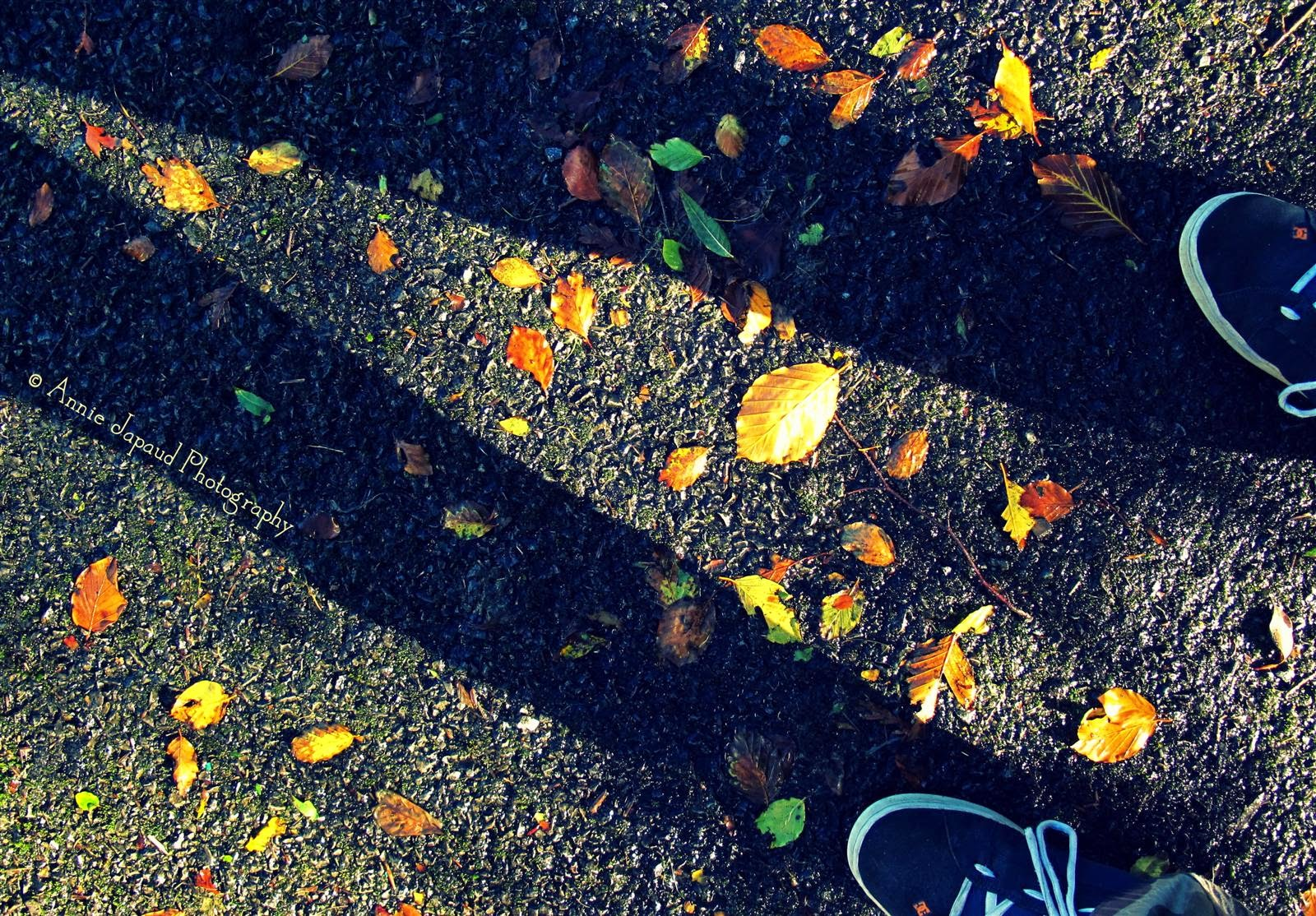 shadow on the ground covered with autumn leaves