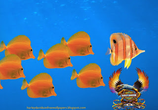 Harley Davidson free desktop wallpapers Harley Davidson Fire Bird Logo in Aquarium with Fishes background