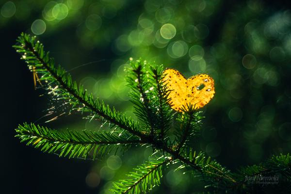 Bokeh Photography by Joni Niemela