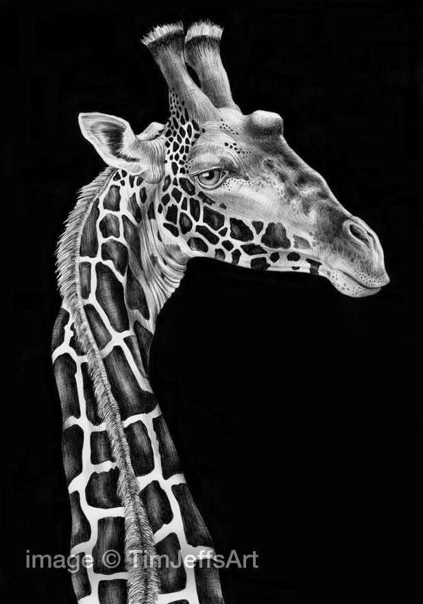 08-Giraffe-Tim-Jeffs-All-Creatures-Great-and-Small-Ink-Drawings-www-designstack-co