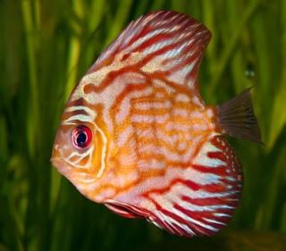 fish discuss