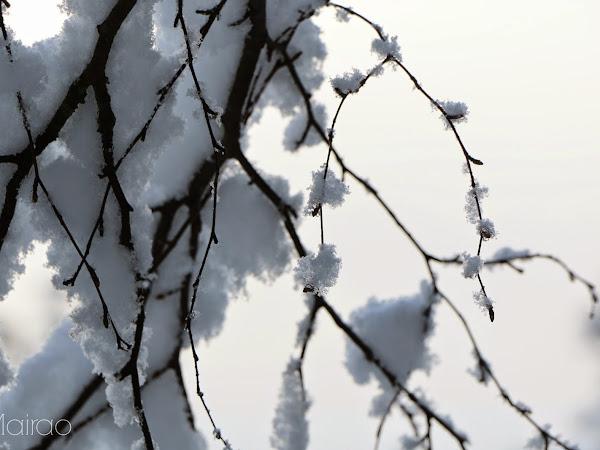 Winterwonderland Finland