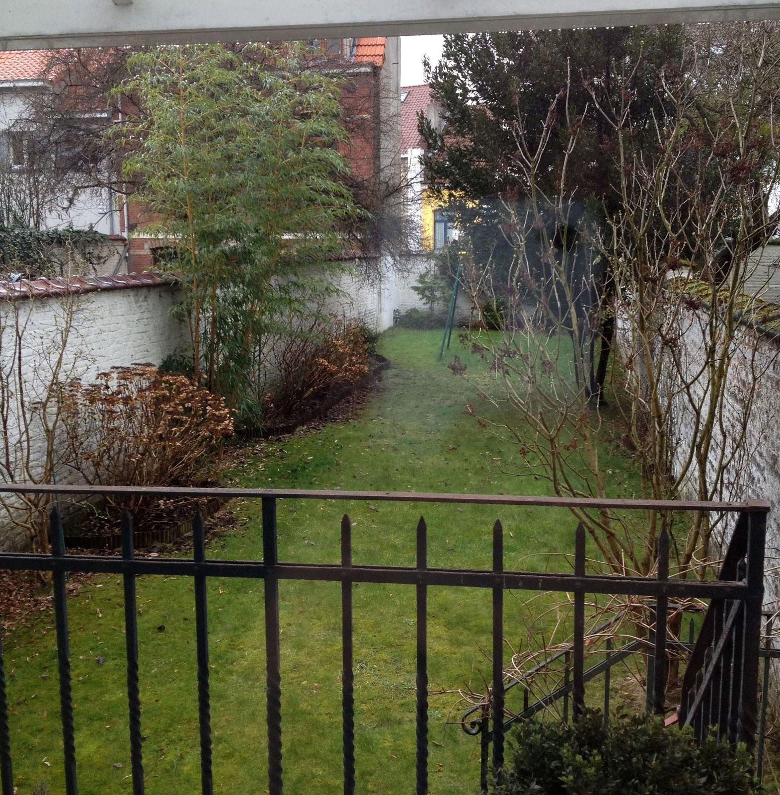 garden rainy