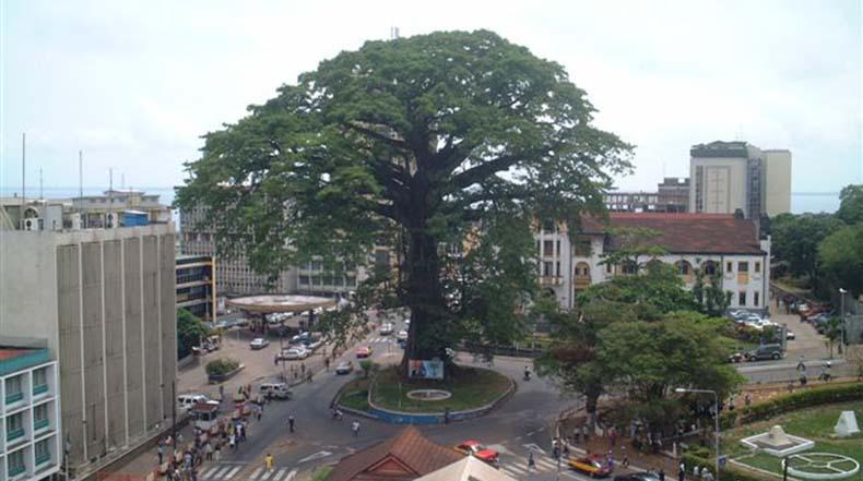 El árbol de algodón en Freetown, Sierra Leona