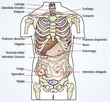 Módulo I Submódulo I: Introducción a Anatomía y Fisiología