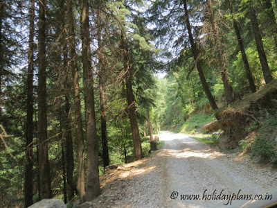Adventurous roads through forests