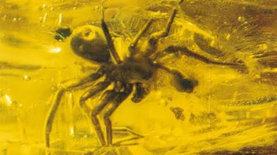 شاهد صور لحشرات محفوظة في قطع كهرمان من ملايين السنين ,عنكبوت في كهرمان