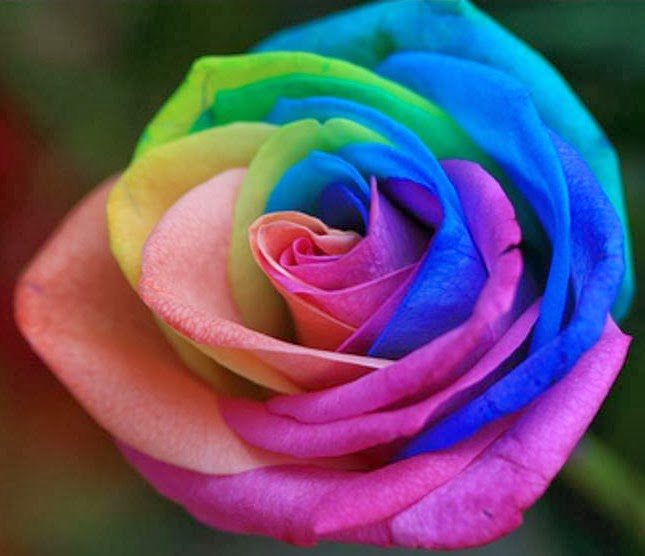 Rainbow colored roses 28 images de floral gallery for How to color roses rainbow