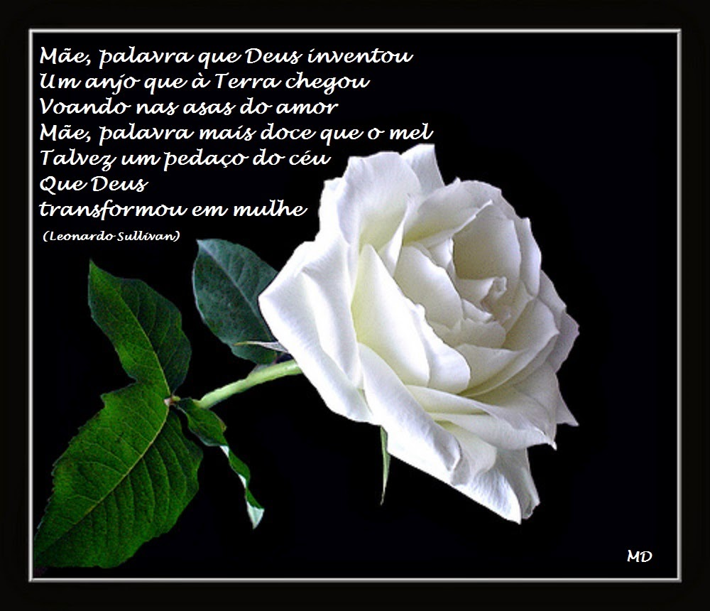 Feliz dia das Mães, Mães, Rosa Branca