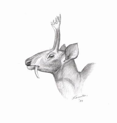 prehistoric deer