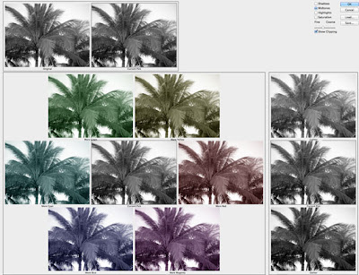 photoshop screen shot of palm trees