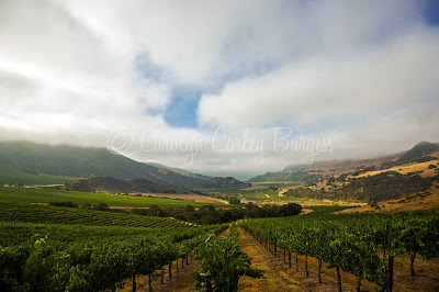 north canyon vineyard - treasury wine estates - beringer - etude