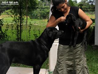 Madu Bogahawatta With pets