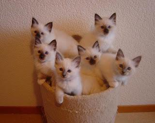 Los gatos mas lindos del mundo