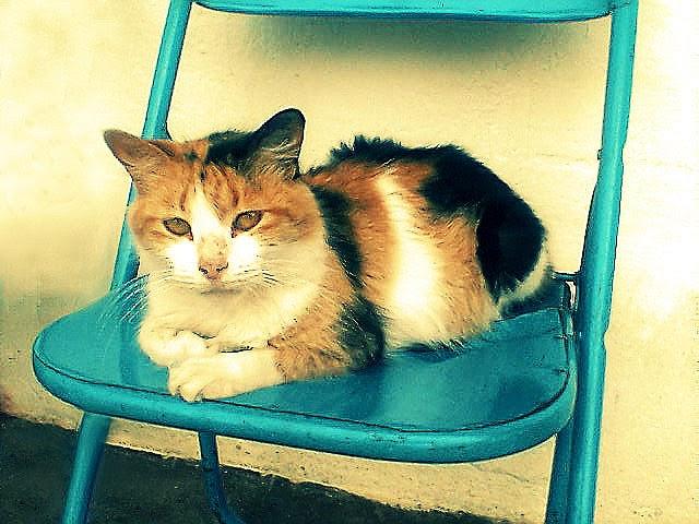 cat breeders portland oregon