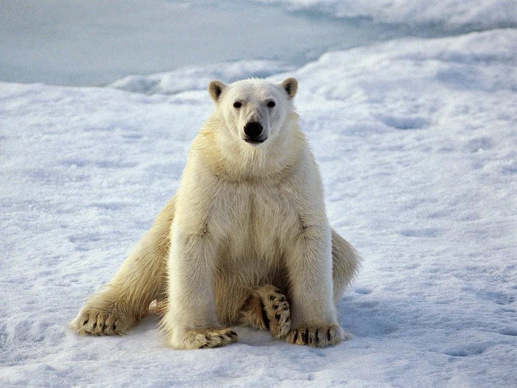 urso jogo do bicho