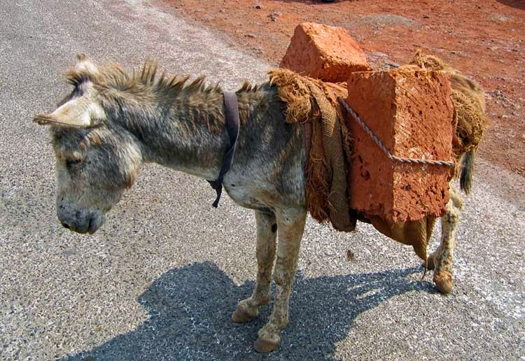 Donkey carrying a load of bricks