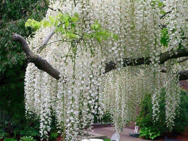 Cascata de Beleza em Flores...