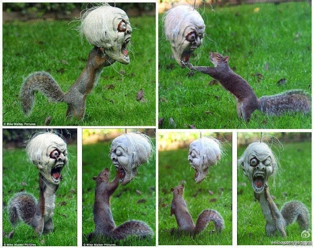 Squirrel  with Halloween mask