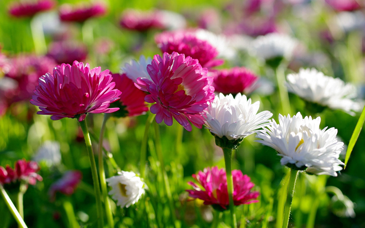 Flowers For Flower Lovers Hd Flowers Wallpapers