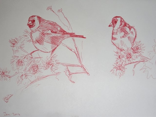 Biro sketch bird goldfinch