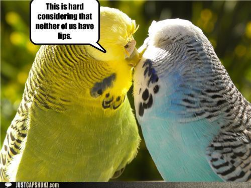 Funny Picture Clip The Word Funny Animal Pictures With