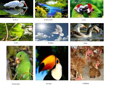 Aves domesticadas