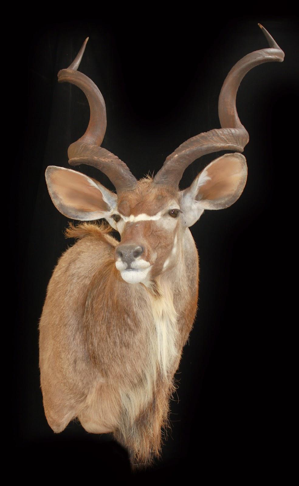 Beeny+Kudu.jpg