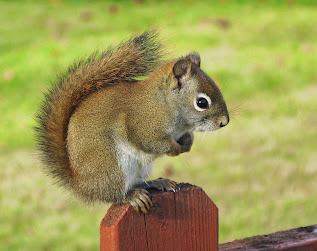 Amazing Creation: Squirrel