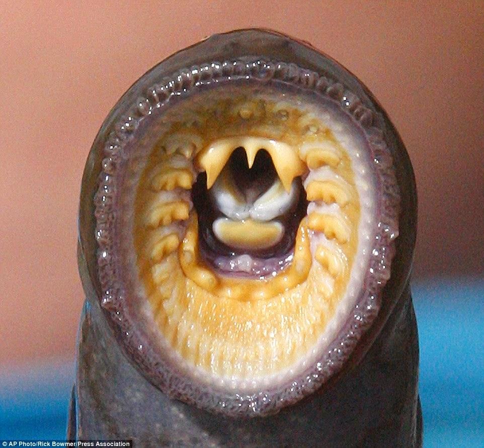fotos de animales raros y feos - BBC Mundo Video y Fotos Las diez especies nuevas más