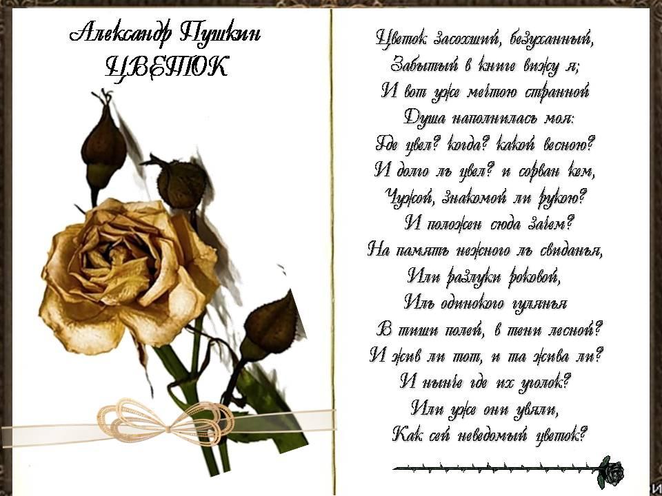 Про стих а с пушкина цветок
