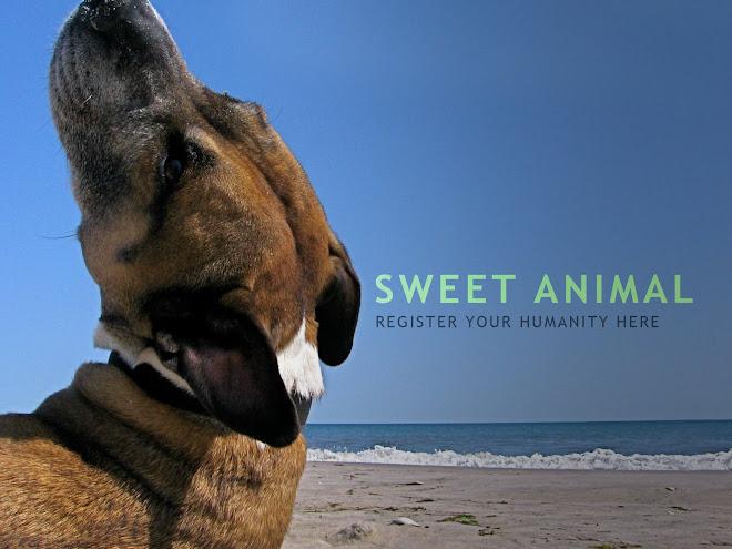 SWEET ANIMAL