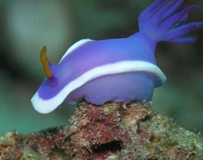 Animals Unique Sea Slug Unique