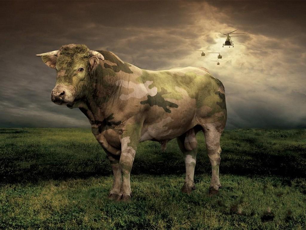 Beautiful   Wallpaper Horse Creative - Camouflage+Cow+Wallpaper  Trends_993191.jpg