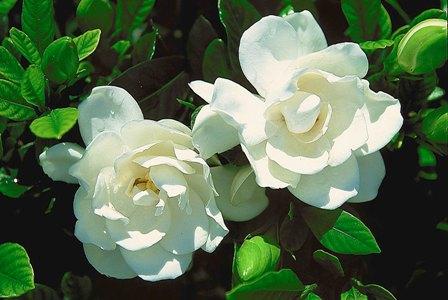 Autoras: cuestionario Gardenia-2