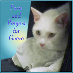 Purring for Guero