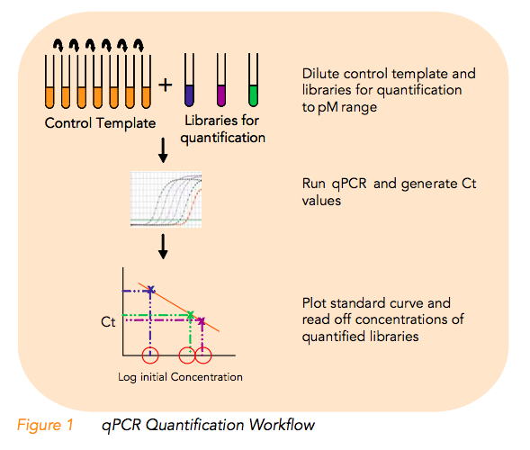 Coregenomics mis quantification of illumina sequencing for How much template dna for pcr