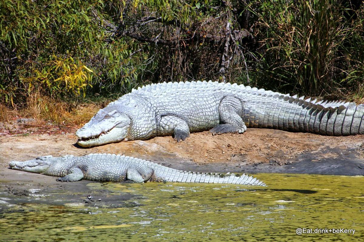 Do Crocodiles Drink Water
