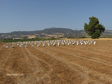 """Το μελισσοκομειο μου στην Ελατεια το καλοκαιρι του 2008 στη θεση """"Πορεϊκα."""
