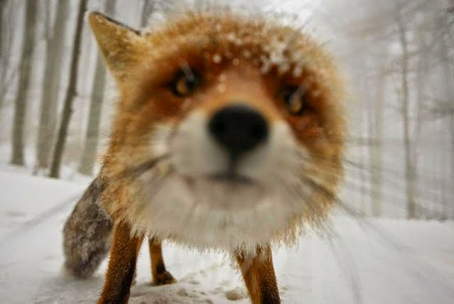 9. These 11 Photos Will Make You Fall In Love With Foxes