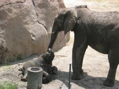 Hình ảnh những chú voi con dễ thương, ngộ nghĩnh, đáng yêu