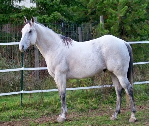 Grey Horses picture 1