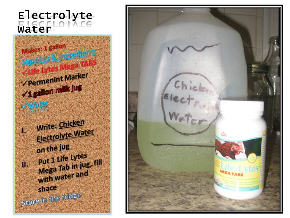 Chicken Electrolyte Water Recipe