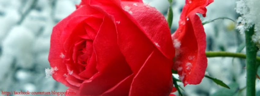 Couverture Facebook Rose Rouge