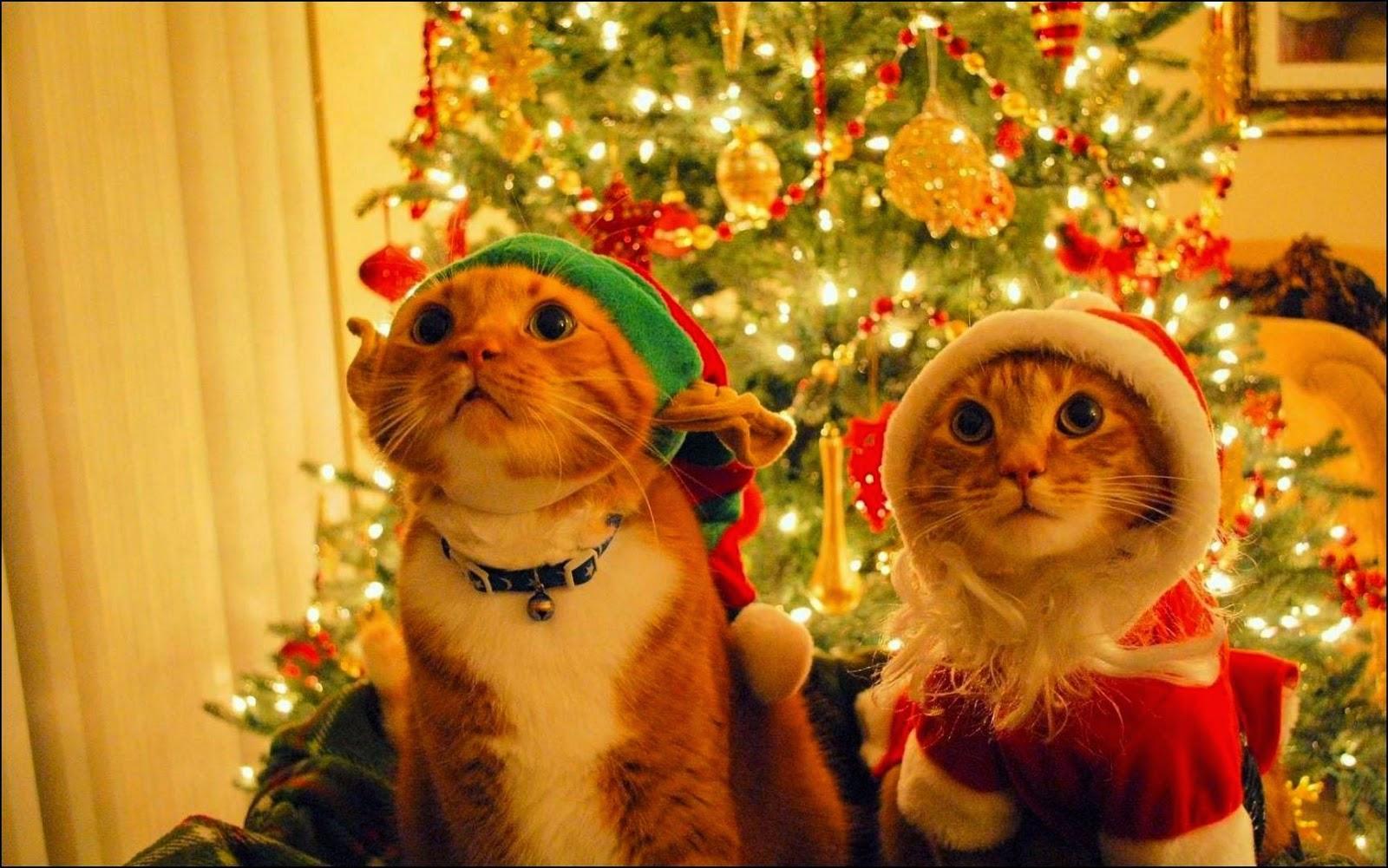 tarjeta de navidad tierna