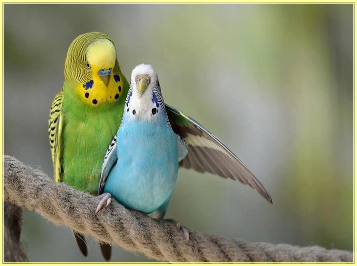 naturalmente susana maria passarinhos