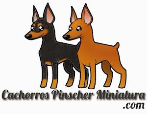 Cachorros Pinscher Miniatura