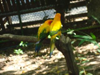 love birds in Zoobic Safari