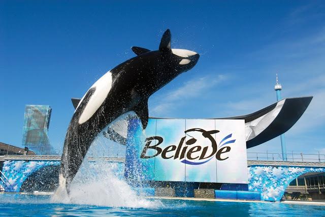 SeaWorld Orlando Believe Shamu Baleia